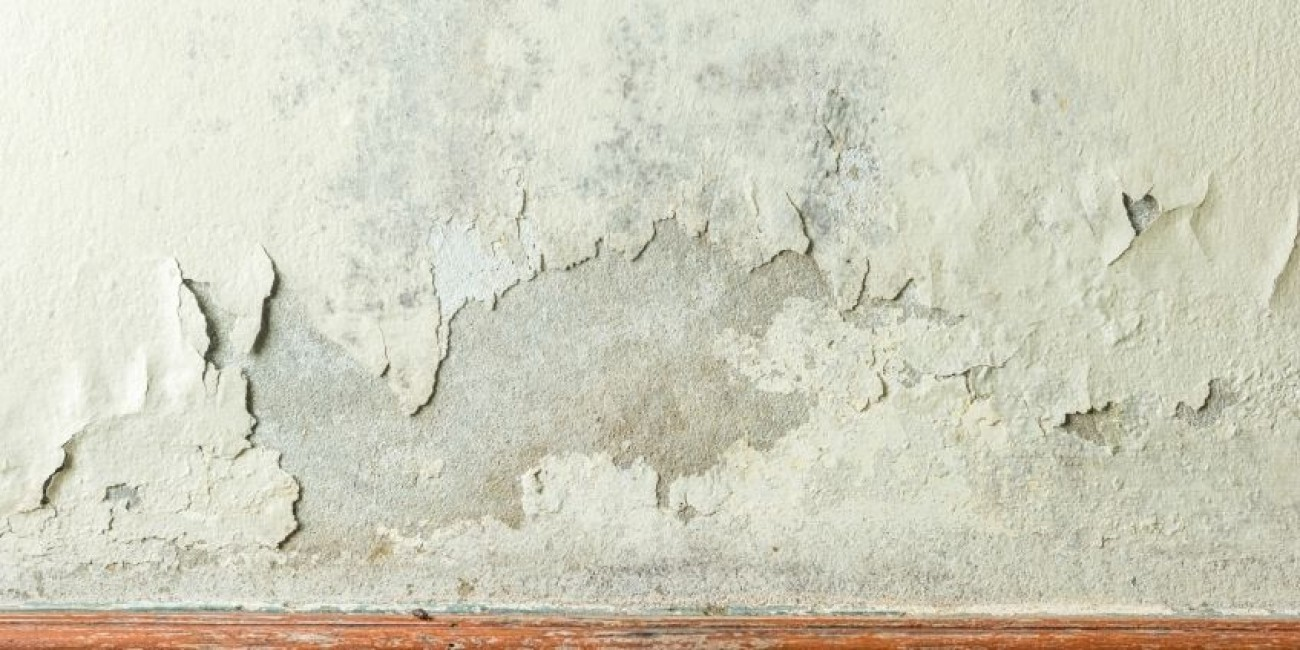 Why You Can't Paint Over Mildew