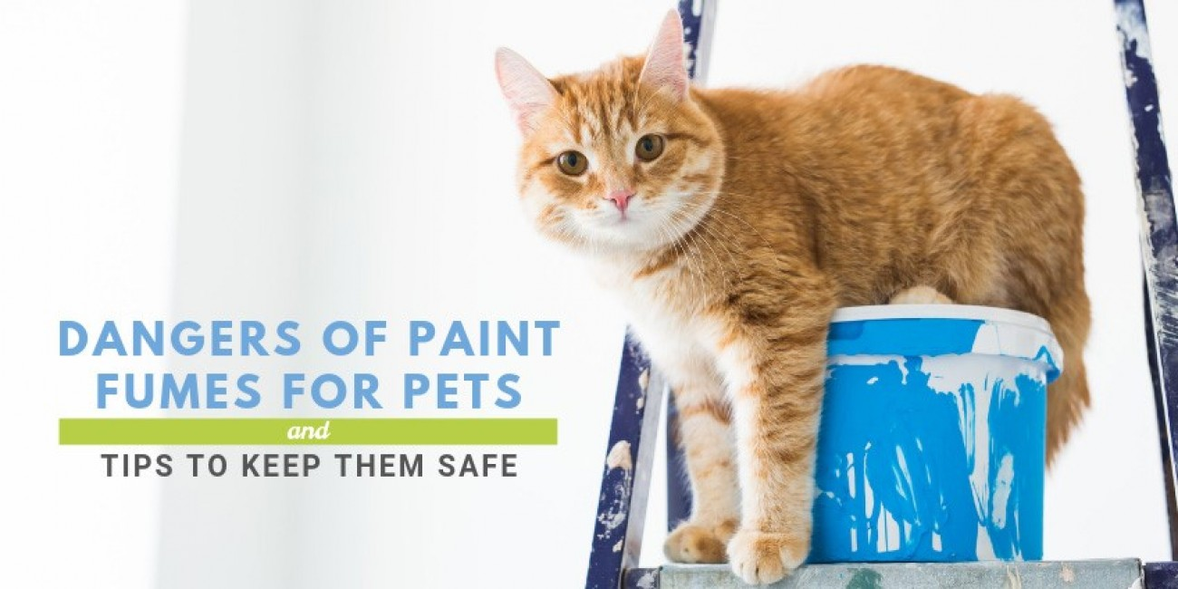 Dangers of Paint Fumes for Pets & Tips to Keep Them Safe