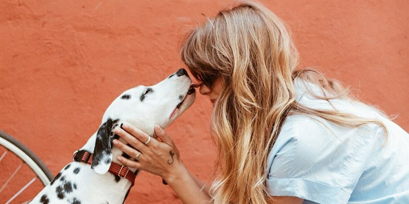 Guide to Choosing Pet-Friendly Paint