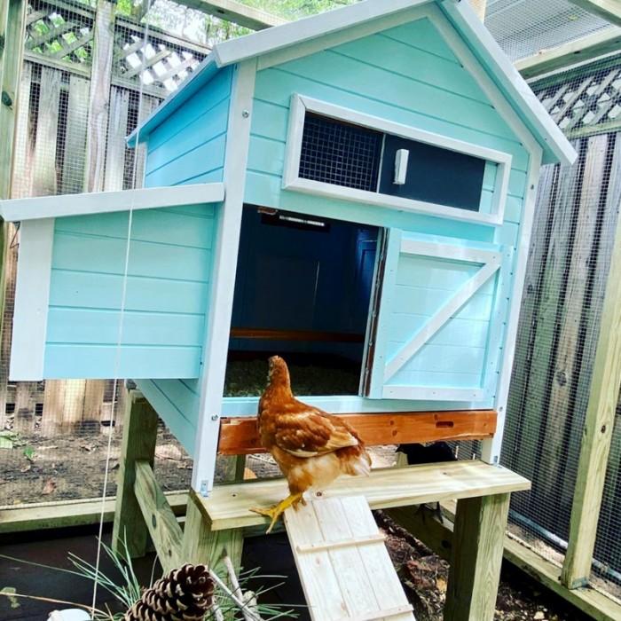 Eggshell Pet Dwellings Paint