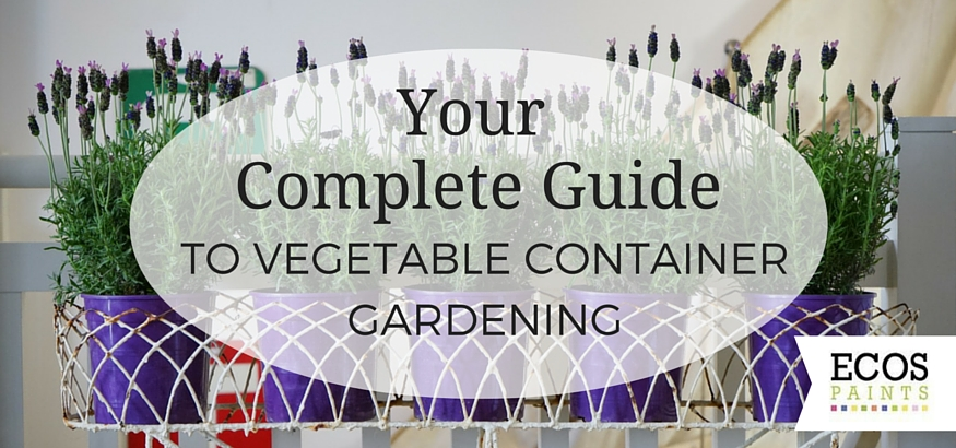 a guide to container herb gardening