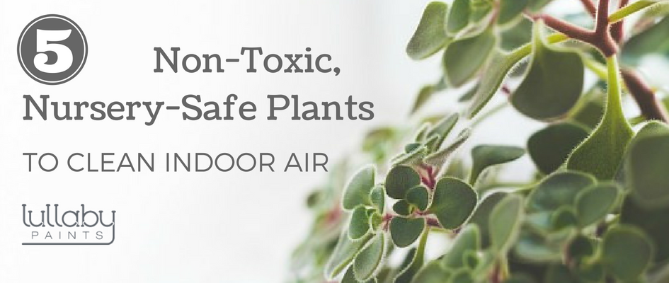 5 Non Toxic Nursery Safe Plants To Clean Indoor Air